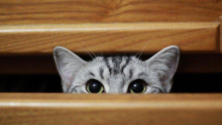 cat_ready