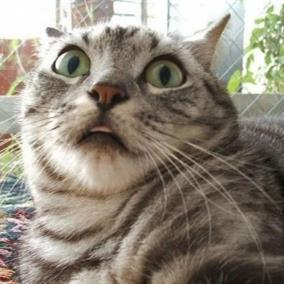 scared-cat